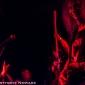 Anvil-TheStache-Grand Rapids_MI-AnthonyNowack-20140514--006